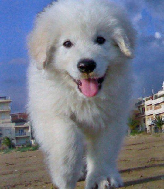 puppy-pics14.jpg